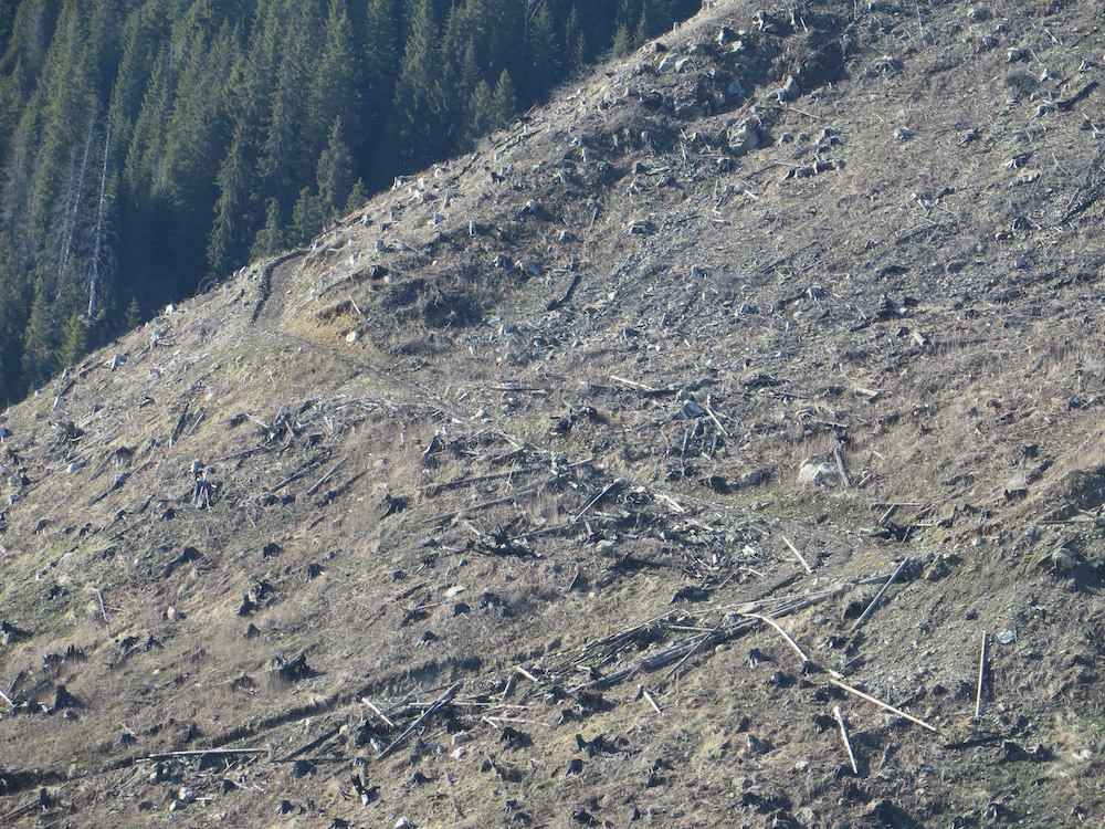 Slopes left bare after logging in Romania. Photo courtesy of Agent Green.