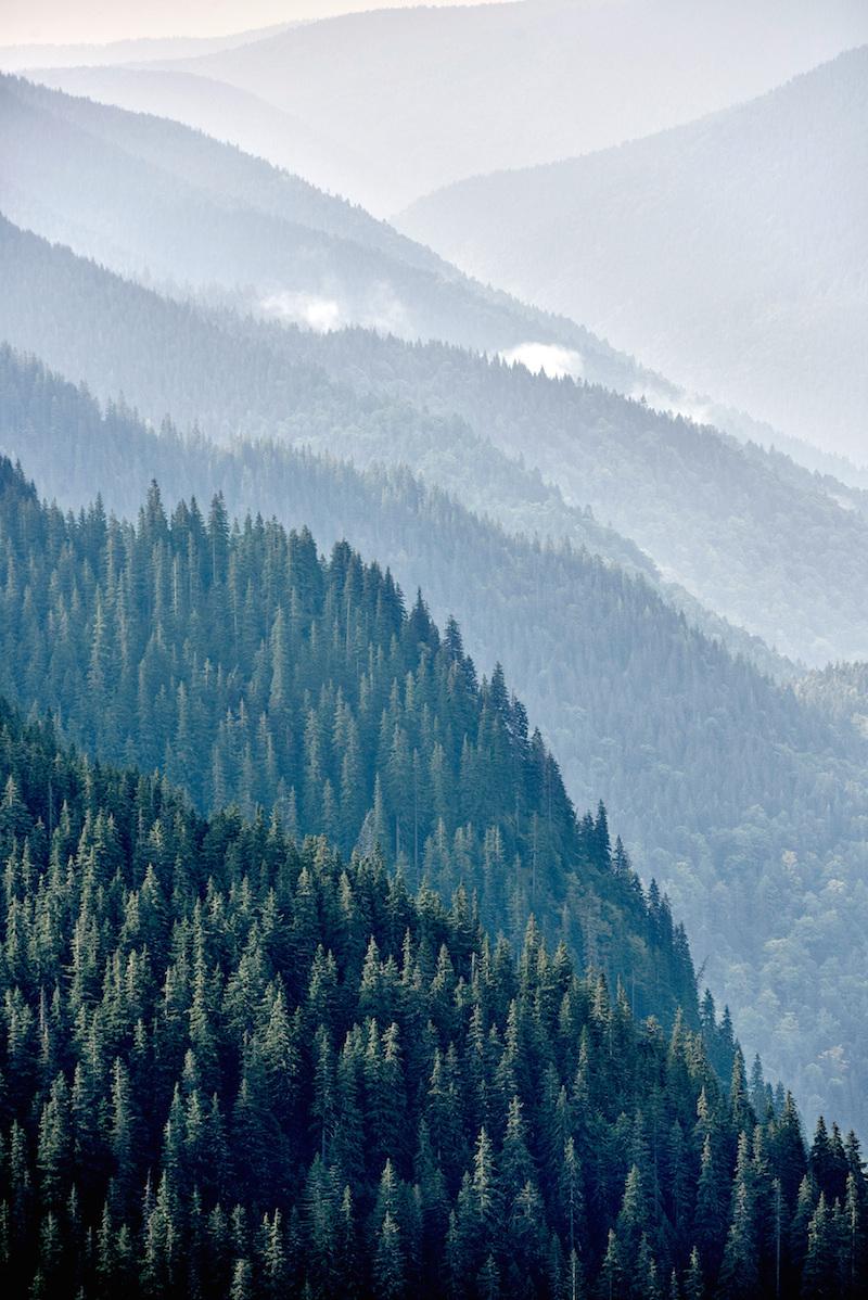 Carpathian mountain forest near the Romanian village of Capatinenii Ungureni. Photo by Thomas Einberger / Greenpeace.