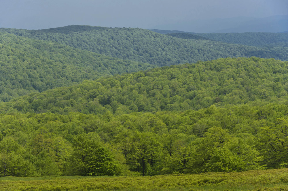 Romanian forest in the Carpathian Mountains. Photo taken in May 2014 by Matthias Schickhofer / Agent Green.