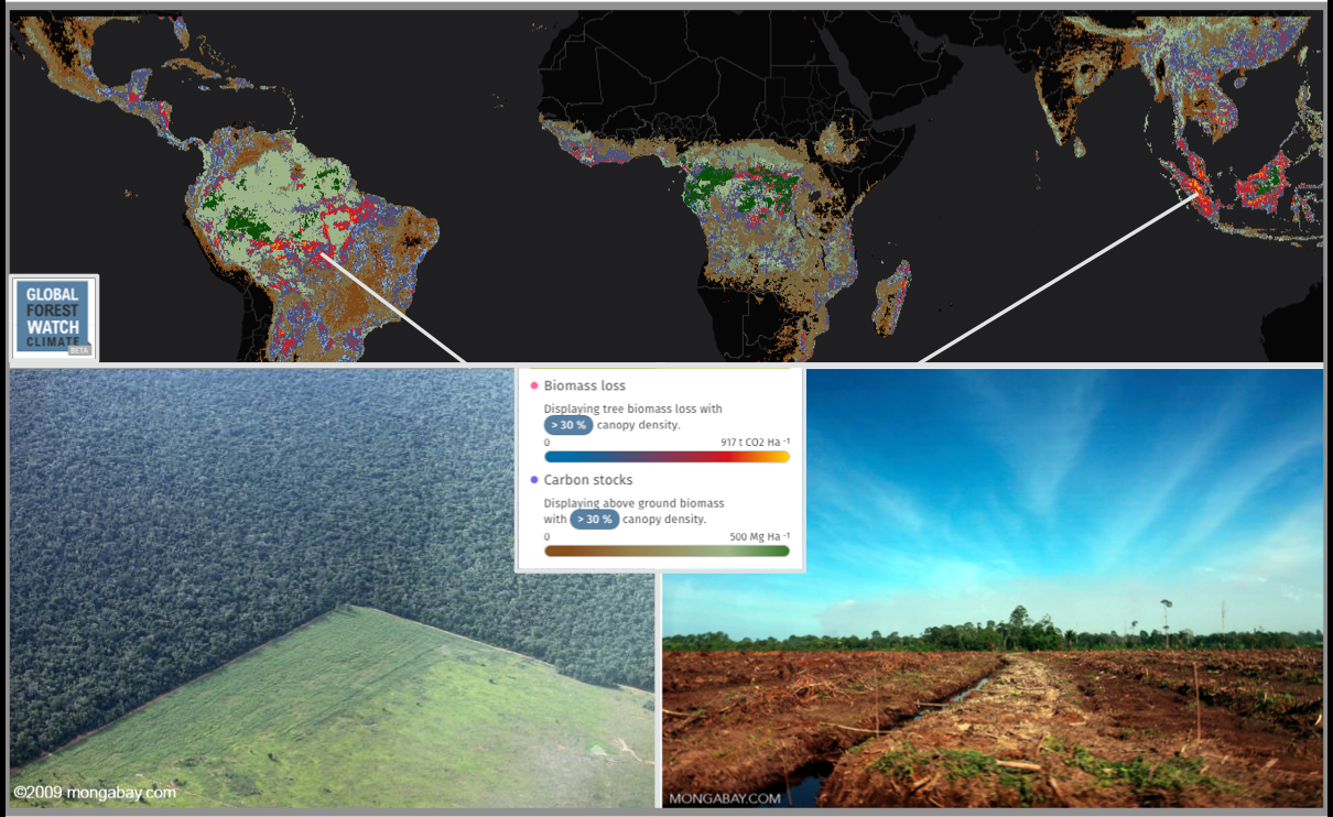 The greatest rates of emissions from biomass loss often correlate to the largest carbon stocks - indicating where the densest, oldest forests lie. A major driver of tropical deforestation are industrial agricultural activities like clearing for cattle pasture in Mato Grosso, Brazil (left) and oil palm plantations in Riau, Indonesia (right).