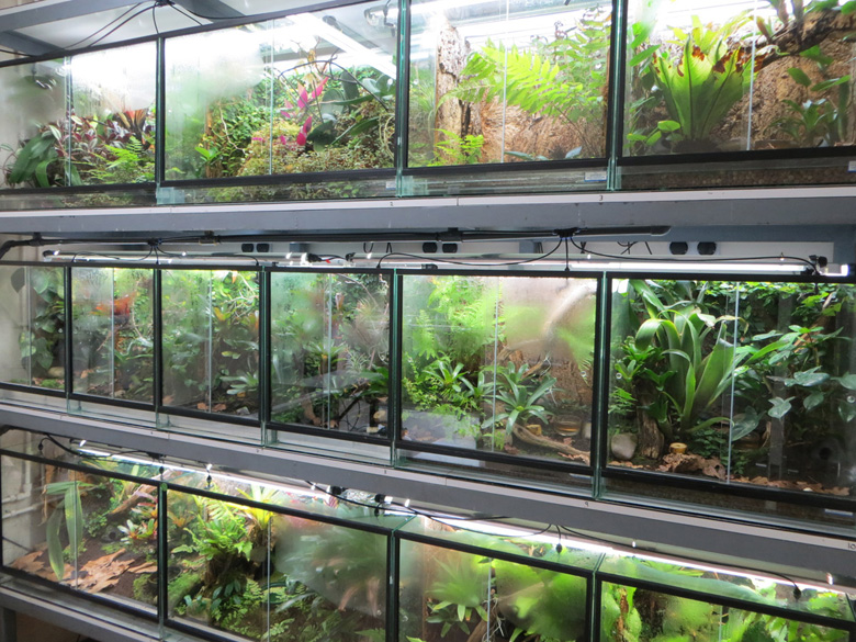 The Dendrobatid breeding room at the Durrell Wildlife Park on Jersey Island (UK). Photo by Matt Goetz.