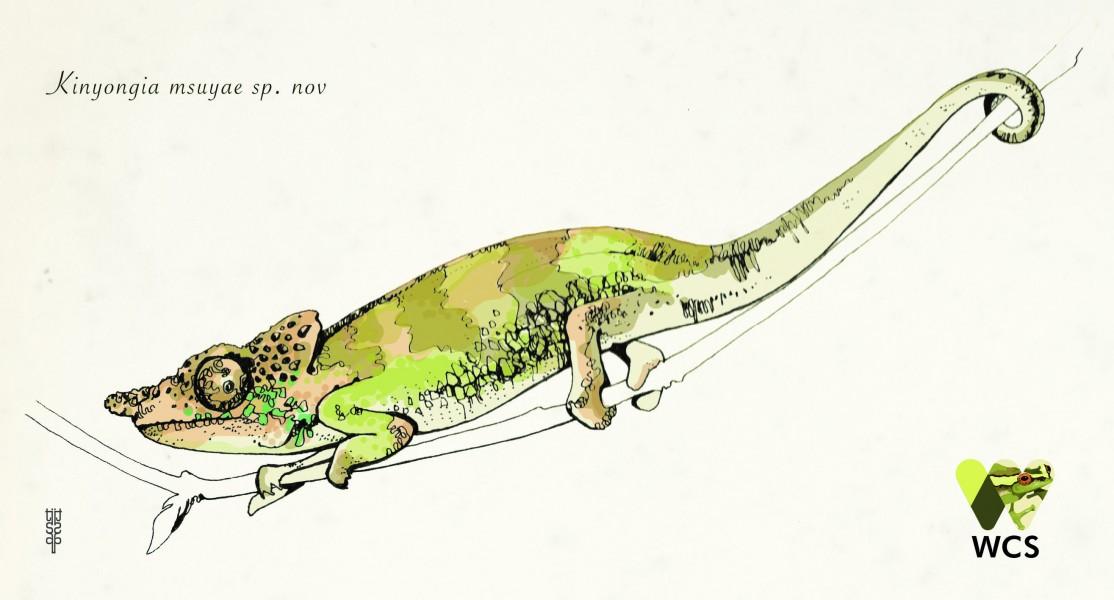 new chameleon draw jan 19
