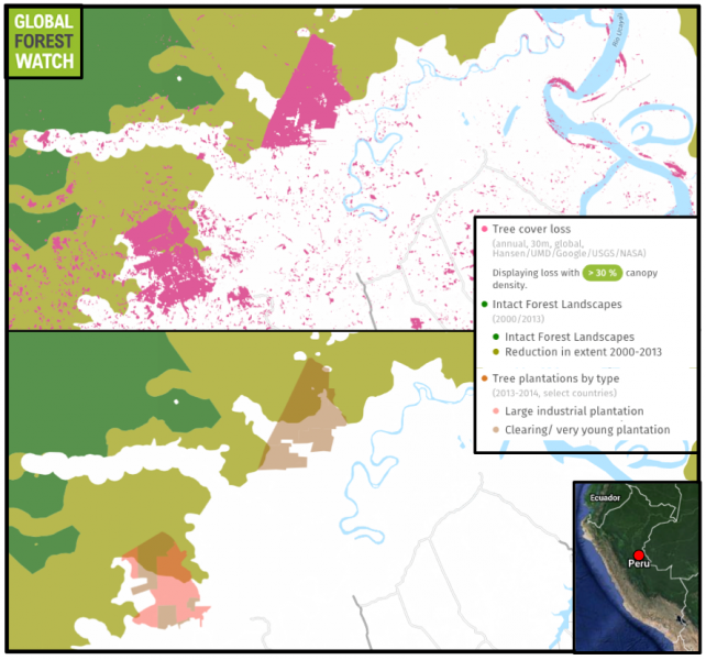 Thousands of hectares have been cleared from once-primary forest since 2012 to develop two large palm oil plantations near Pucallpa, Peru.
