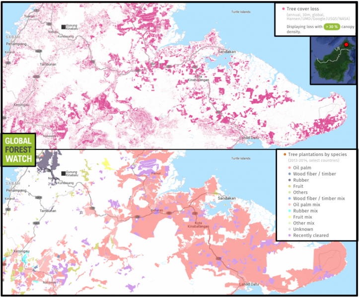 Global Forest Watch shows the Malaysian Borneo state of Sabah lost around 15 percent of its tree cover between 2001 and 2015, mostly from official plantation areas.