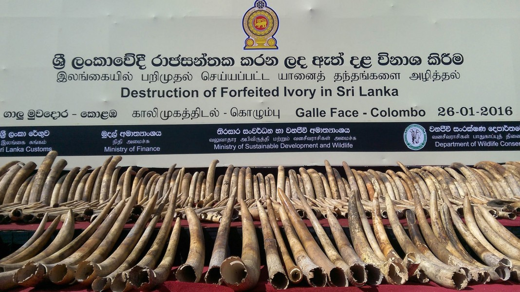 Sri Lanka crushed more than 300 ivory tusks to demonstrate its intolerance for wildlife crime. Photo courtesy of Vikalpa, CC by 2.0 license (https://www.flickr.com/photos/vikalpasl/23995130213/in/album-72157661628091034/)