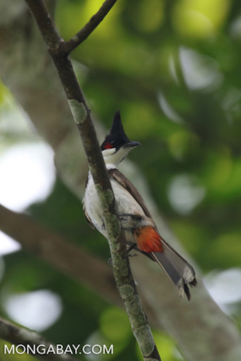 An unidentified species of bird photographed in China. Photo by Rhett A. Butler.