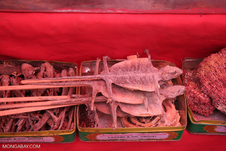 Lizards-on-a-stick in a Chinese market. Photo by Rhett A. Butler.