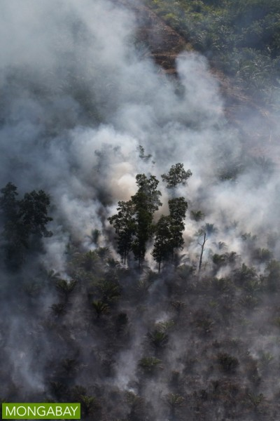 A peatland burns in Indonesia's Riau province in 2015. Photo by Rhett A. Butler