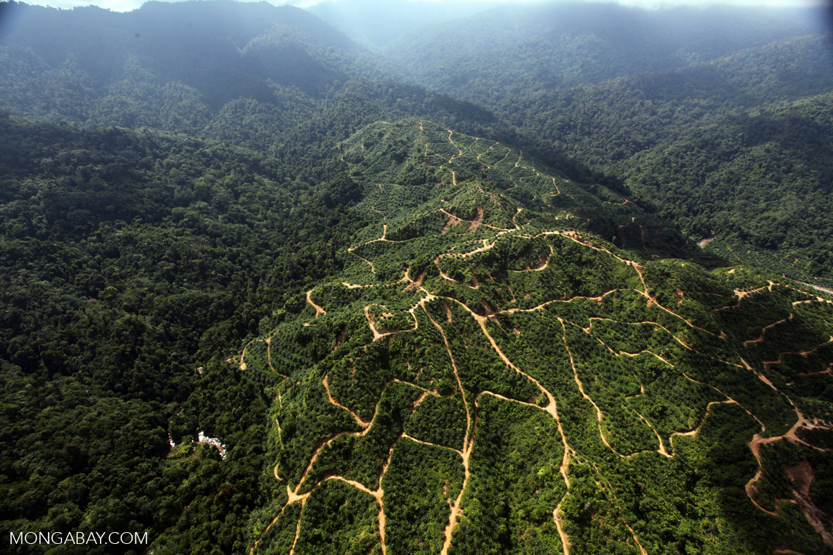 A landscape of oil palm in Malaysia's Sabah State. Photo by Rhett A. Butler