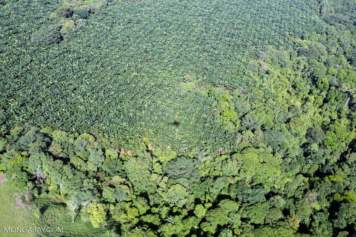 An oil palm plantation in Costa Rica. Photo by Rhett A. Butler
