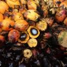 Wilmar grabbed indigenous lands in Sumatra, RSPO finds
