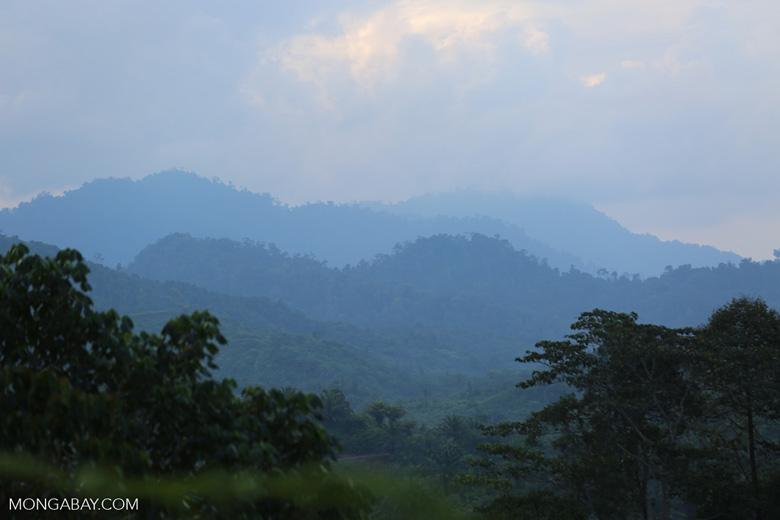 Rainforest in the Gunung Leuser ecosystem. Photo by Rhett Butler.