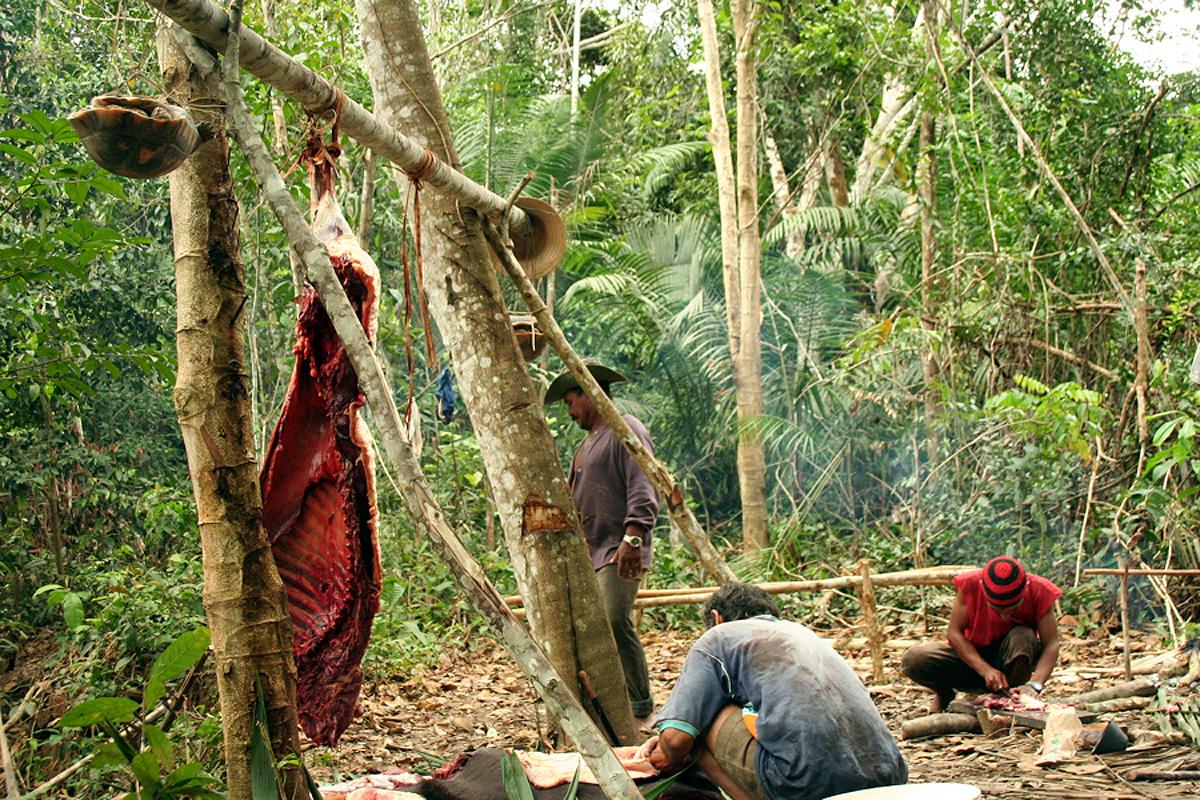 Pauini Amazonas fonte: imgs.mongabay.com