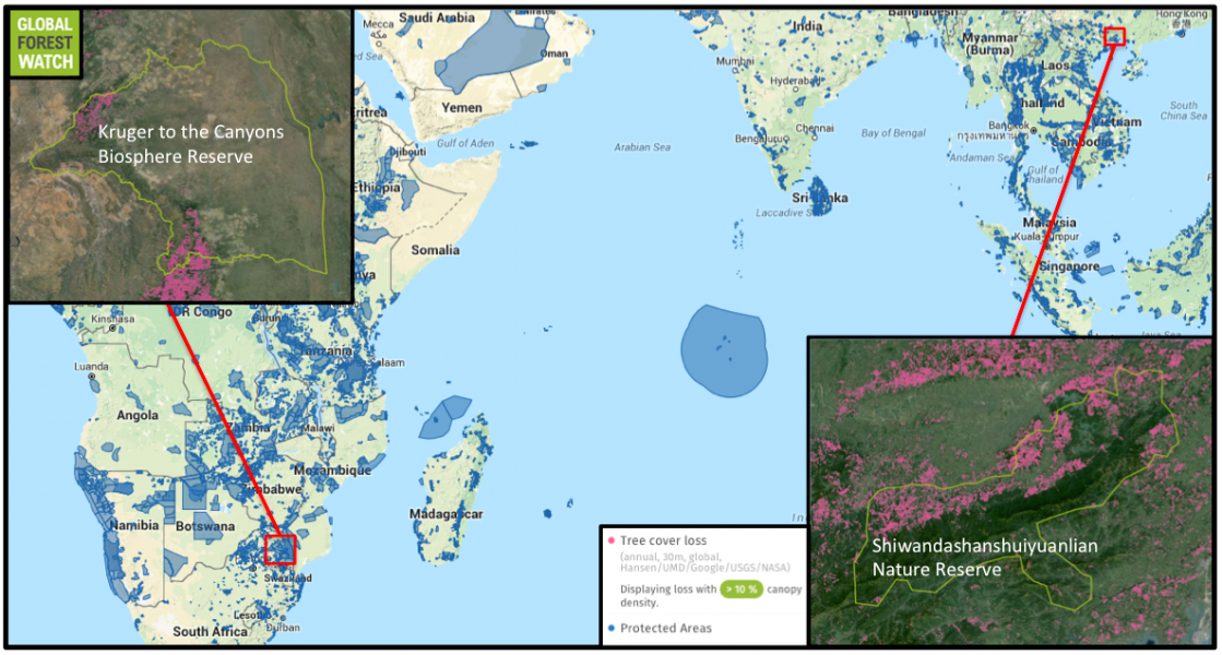 The study found South Africa, Thailand, and Australia had some of the world's lowest protected area (PA) deforestation rates while China, India, and Indonesia had some of the highest. Forest monitoring platform Global Forest Watch shows Kruger to the Canyons Biosphere Reserve in South Africa, one of the country's large PAs most affected by tree cover loss from deforestation and plantation activity still experienced much loss than Shiwandashanshuiyuanlian Nature Reserve, which is one of China's most-affected large PAs. Kruger to the Canyons lost 3.5 percent of its tree cover from 2001 through 2014, while Shiwandashanshuiyuanlian lost 11.6 percent.