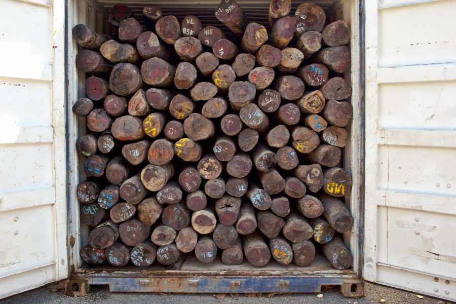 VOHEMAR, MADAGASCAR – AUGUST 17, 2009: Illegal rosewood fills a container in the port town of Vohemar. Each container can hold between 150-250 rondin and is destined for China and in some cases Europe. Although the government issued a blockage on the port the local traders must only pay a token fine before it can be exported. Photo by Toby Smith/Environmetnal Investigation Agency.