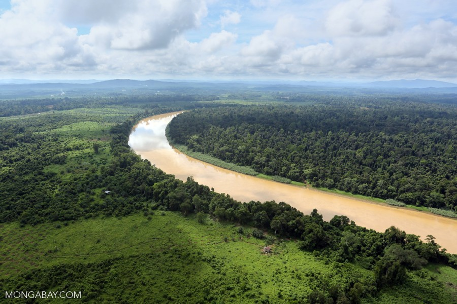 Deforestation for oil palm along this Kinabatangan River in Malaysian Borneo