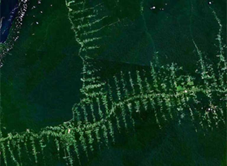 """Where Amazon dams are built, roads soon follow. This satellite image shows roads spreading out in a forest along a typical """"fishbone"""" pattern. Scientists have yet to quantify to what degree dams increase the amount of deforestation caused by roads and other development as compared to the increase that would occur without the building of dams in the same area. Photo courtesy of NASA."""