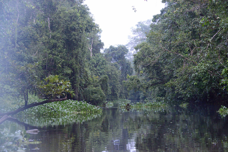 Forest along the Manangul River, a tributary of the Kinabatangan. Photo by Russell A. Mittermeier.