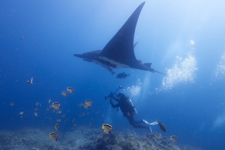A diver observing a giant oceanic manta ray. Photo by Elias Levy via Flickr.