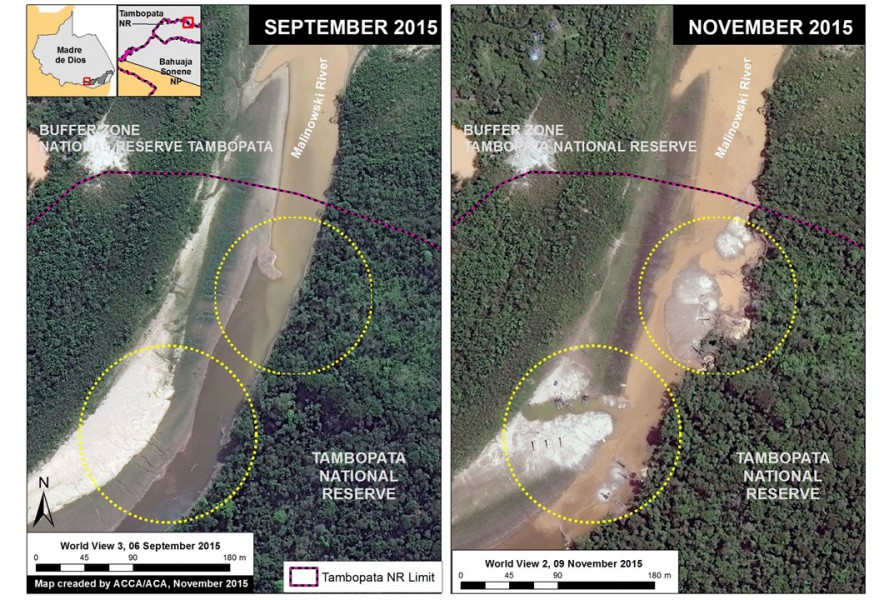 Satellite imagery showing the recent incursion of gold mining activity into Tambopata National Reserve. Image courtesy of MAAP.
