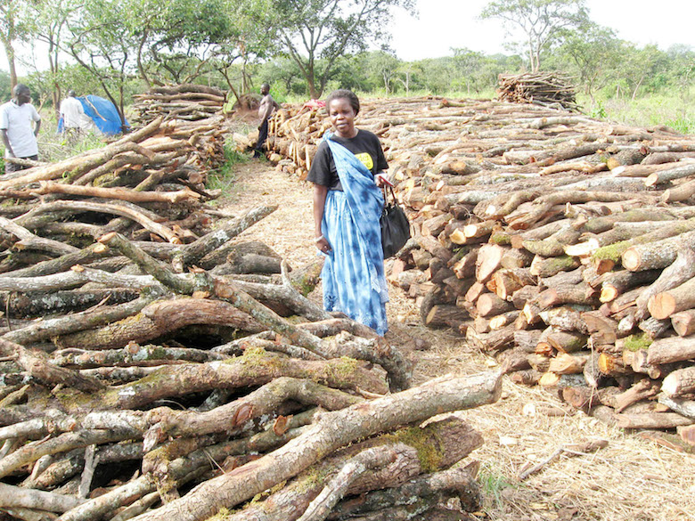 Member of the Nwoya District Parliament Lilly Adong visits a pile of timber destined for charcoal production in Purongo sub-county. Photo by Arnest Tumwesige.