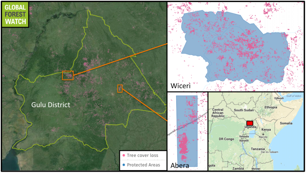 Gulu District in northern Uganda lost more than 4 percent of its tree cover from 2001 through 2014, according to Global Forest Watch. Protected areas have not been immune, with Wiceri and Abera Forest Reserves losing significant proportions of their tree cover in the past decade.