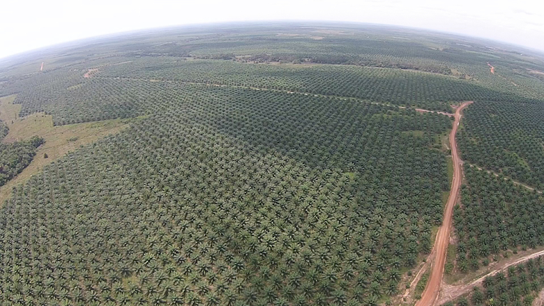 One of Poligrow's established Madondo plantations near Mapiripán. Photo courtesy of the Environmental Investigation Agency.