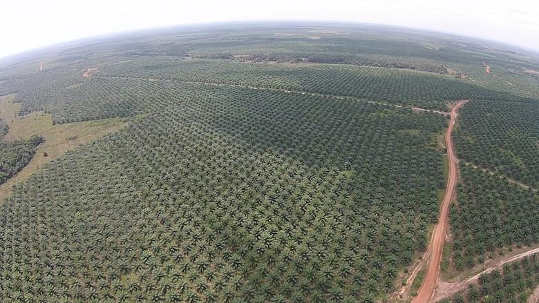 One of Poligrow's established Madondo plantations near Mapiripán. Photo courtesy of the Environmental Investigation Agency.