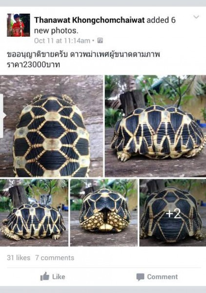 Posting discovered on Facebook which helped to lead to the arrest of two suspects in Thailand in possession of Burmese star tortoises stolen from a sanctuary in Myanmar in October. Photo courtesy of WCS Myanmar.