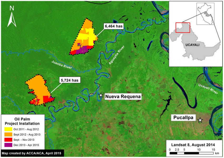 Two large-scale oil palm projects near Nueva Requena in the central Peruvian Amazon began in late 2011 and now cover nearly 12,200 hectares, according to analysis recently released by MAAP. Data indicate that prior to plantation development, much of this area was occupied by primary forest. Image courtesy of MAAP.