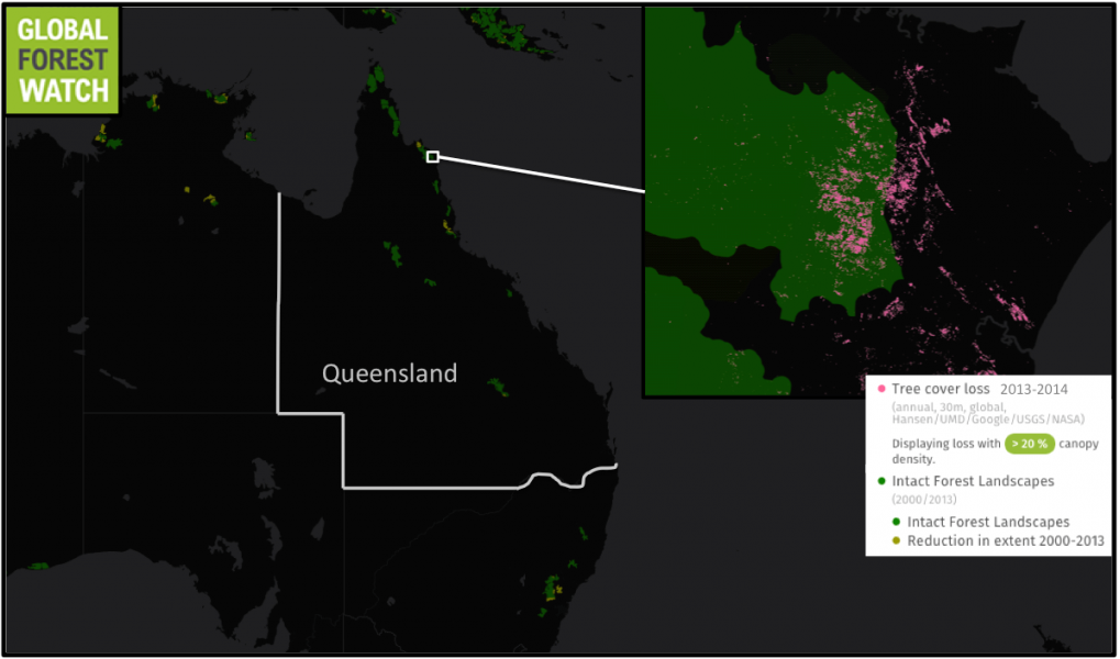 Queensland's remaining large tracts of primary forest called Intact Forest Landscapes (IFLs) are scattered along its coasts. Global Forest Watch shows significant tree cover loss has occurred within several IFLs within the past few years.