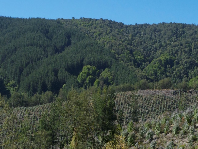 Two generations of plantations and a natural temperate forest in central Chile. Photo by Robert Heilmayr.