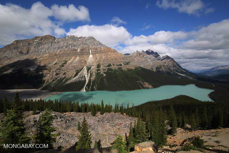 Peyto Lake, Alberta Canada. Photo by Rhett Butler.