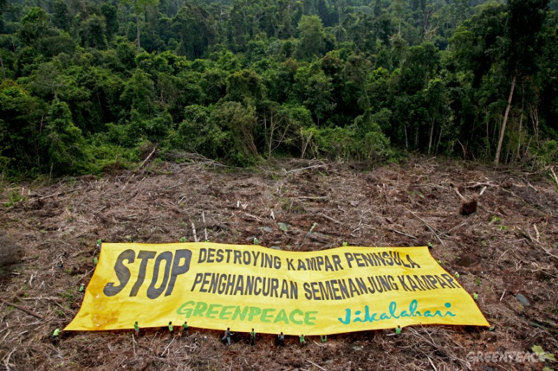 f0711081 - 8th November 2008 - KAMPAR PENINSULAR, RIAU PROVINCE, SUMATRA Greenpeace activists from the MY Esperanza unfurl a 40 x 20 meter banner on recently cleared peatland forest in the pulp and paper concession of PT. Arara Abadi-Siak owned by APP (Asia Pulp and Paper). Greenpeace is protesting against the destruction of Kampar Peninsular's peatland forest by pulp and paper and palm oil industries and calling for the Indonesian Government to implement a moratorium on deforestation. Peatland forest is critical for maintaining biodiversity and it's degradation releases vast stores of carbon thereby contributing to global climate change. ©Greenpeace/John Novis
