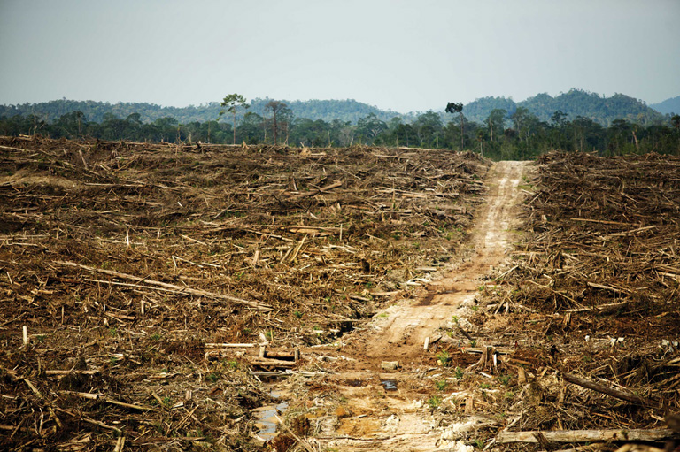 Land cleared for palm oil plantations in Indonesia. Palm oil has been linked to land grabbing in South-East Asian countries. Photo by David Gilbert/RAN Flickr Creative Commons License.