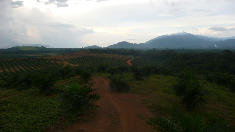 Oil palm plantation in West Kalimantan. Photo by Erik Meijaard.