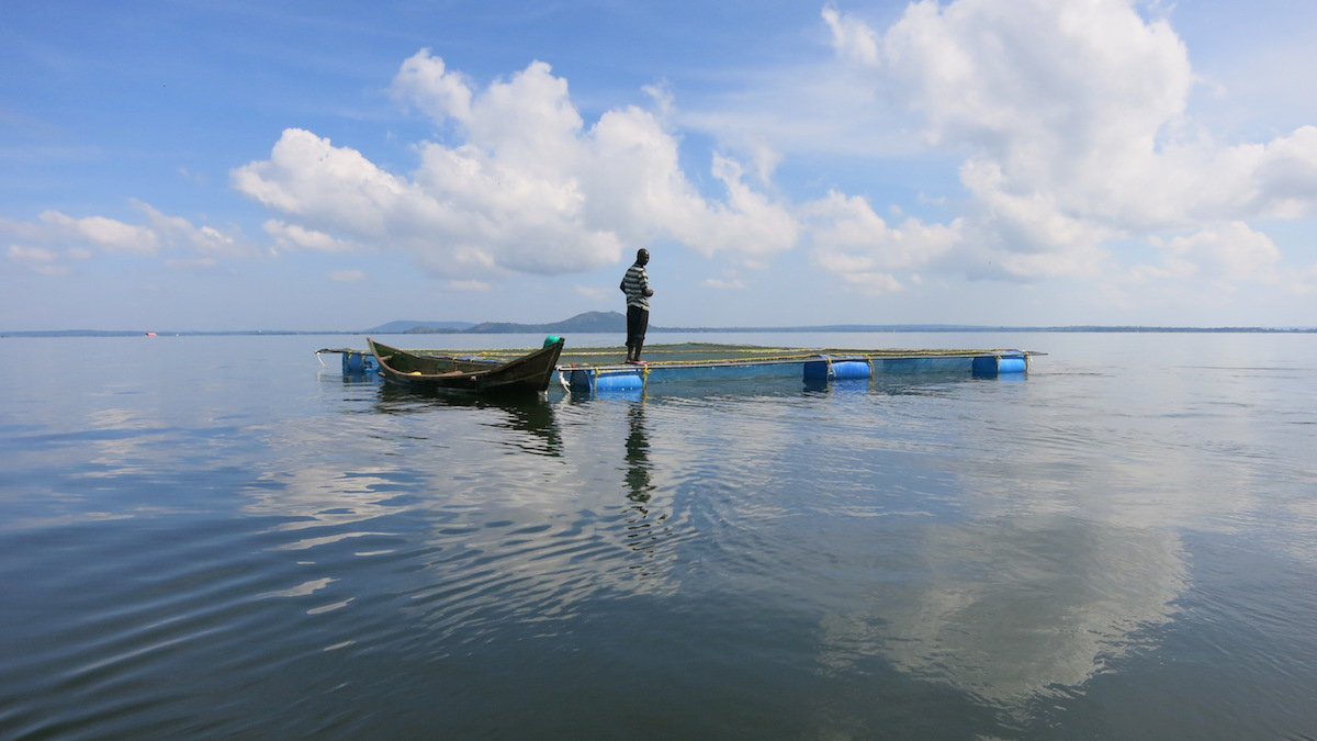 A floating fish cage on Lake Victoria. Photo by LAVICORD Project/Maseno University.