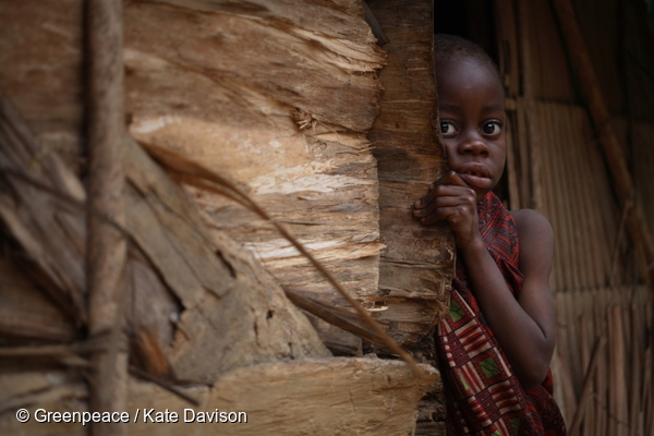 Indigenous people, Baka (pygmy) in the forests of Cameroon. A young child peeps out from behind the door of her house. Photo credit: Greenpeace / Kate Davison