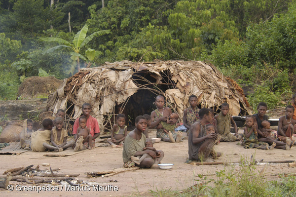 "Survival International has lodged a formal complaint to the Organisation for Economic Co-operation and Development (OECD) against WWF in Cameroon for violating the human rights of the indigenous Baka ""Pygmies"" of southeast Cameroon. Photo courtesy of Greenpeace / Markus Mauthe."
