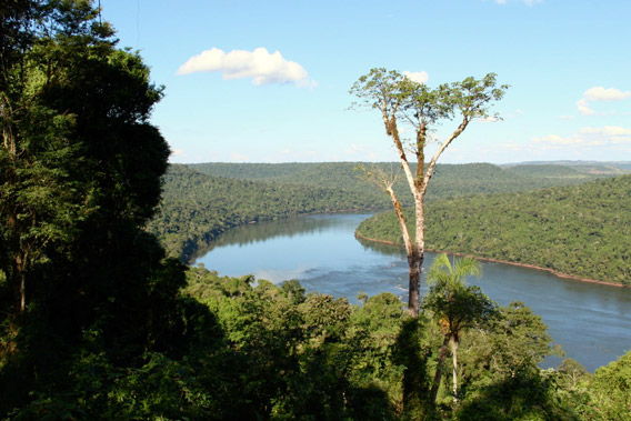 The Atlantic Forest in Misiones, Argentina. Photo courtesy of The World Land Trust (WLT).