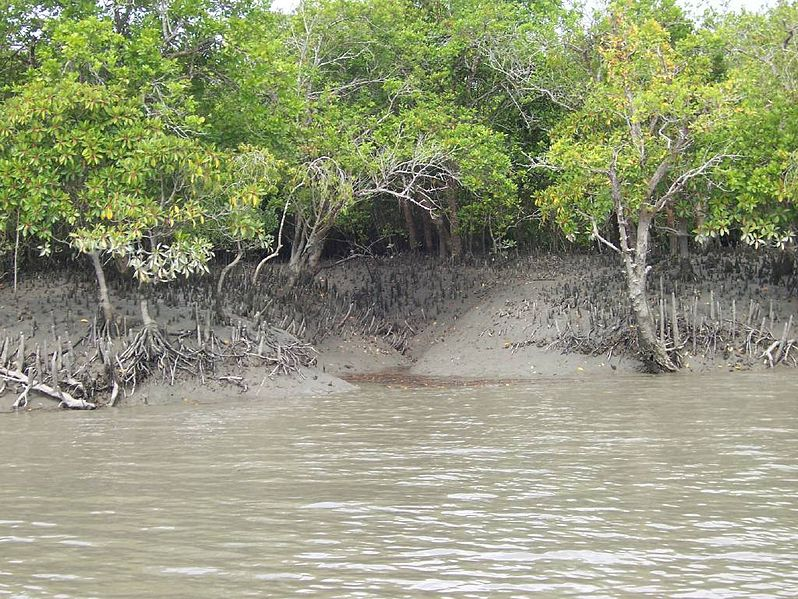 Sundarbans mangrove forest at mid-tide. Photo by V. Malik via Wikimedia Commons (CC 2.0).