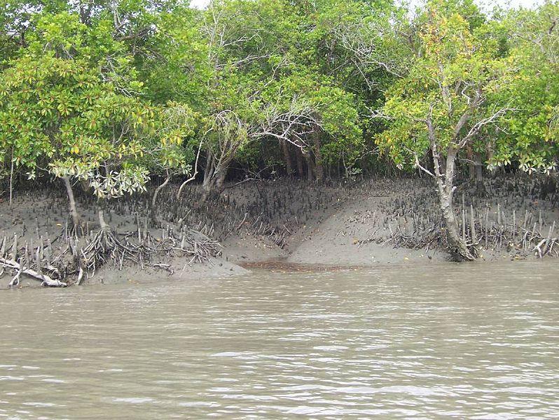 Sundarbans mangrove forest at mid-tide. Photo by V. Malik via Wikimedia Commons (CC 2.0).