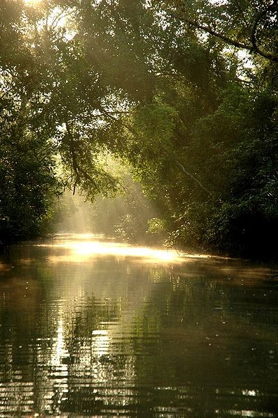 Sun filters through Sundarbans forest. Photo by Bri Vos via Wikimedia Commons (CC 2.0).
