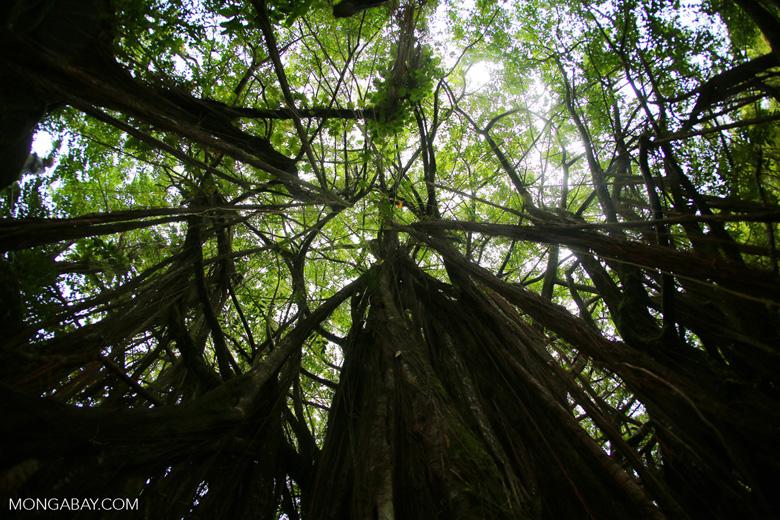 28ca54d70cd 77 inspiring rainforest pictures