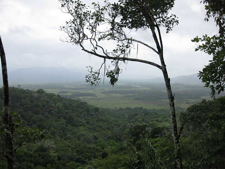 The Guyana rainforest: valuable to the Wapichan traditional lifestyle, to Amazon biodiversity, and as a repository for carbon as a hedge against escalating climate change. Photo: Wikimedia Commons. Permission granted to copy, distribute and/or modify this document under the terms of the GNU Free Documentation License, Version 1.2 or later.