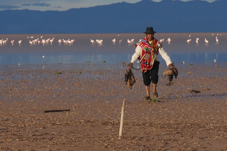 Flamencos y Pariwanas todavía resistiendo el bajo nivel del Lago Poopó, Noviembre de 2014 (Ayllu Pumasara, ribera oriental del lago). Fuente: CEPA.