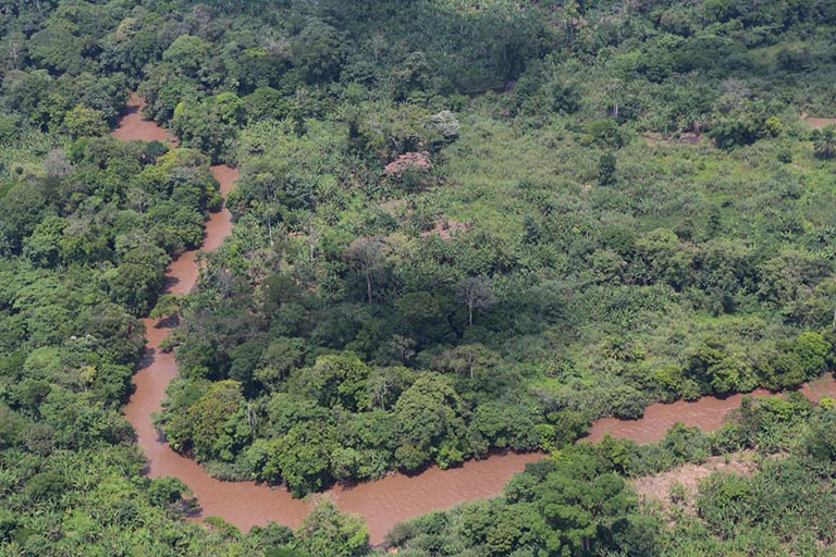 Congo rainforest habitat like that seen here can support lowland gorillas and other primates. Photo by Photo by Myriam Asmani / MONUSCO