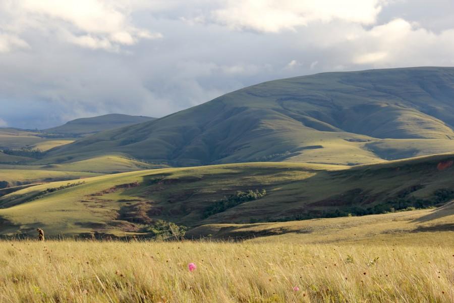 A native grassland dominates the landscape in a portion of Madidi National Park, Bolivia. Photo by Morgan Erickson-Davis.