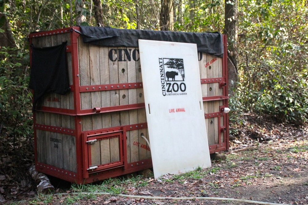 The container in which Harapan was shipped from the Cincinnati Zoo. Photo by Ridzki R. Sigit