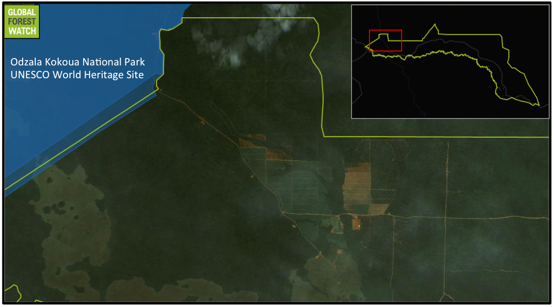 Satellite imagery obtained in December 2015 shows the tree cover loss in the largest Atama concession took place in areas now occupied by what appear to be tree plantations. These plantations are situated less than five kilometers (3.1 miles) from Odzala Kokoua National Park, a UNESCO World Heritage Site. Map by Global Forest Watch